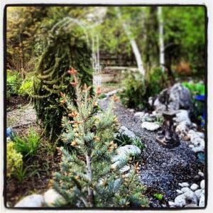 Yesterdays Garden